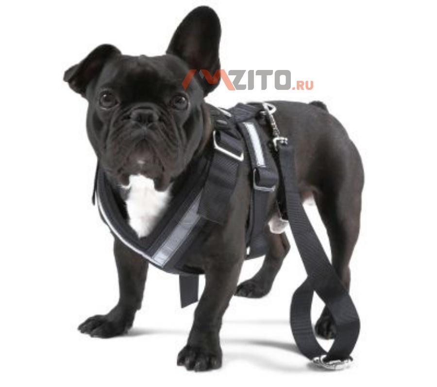 Ремень безопасности для собаки Skoda Dog Safety Belt размер M