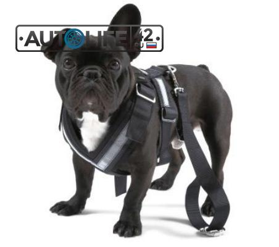 Ремень безопасности для собаки Skoda Dog Safety Belt размер L