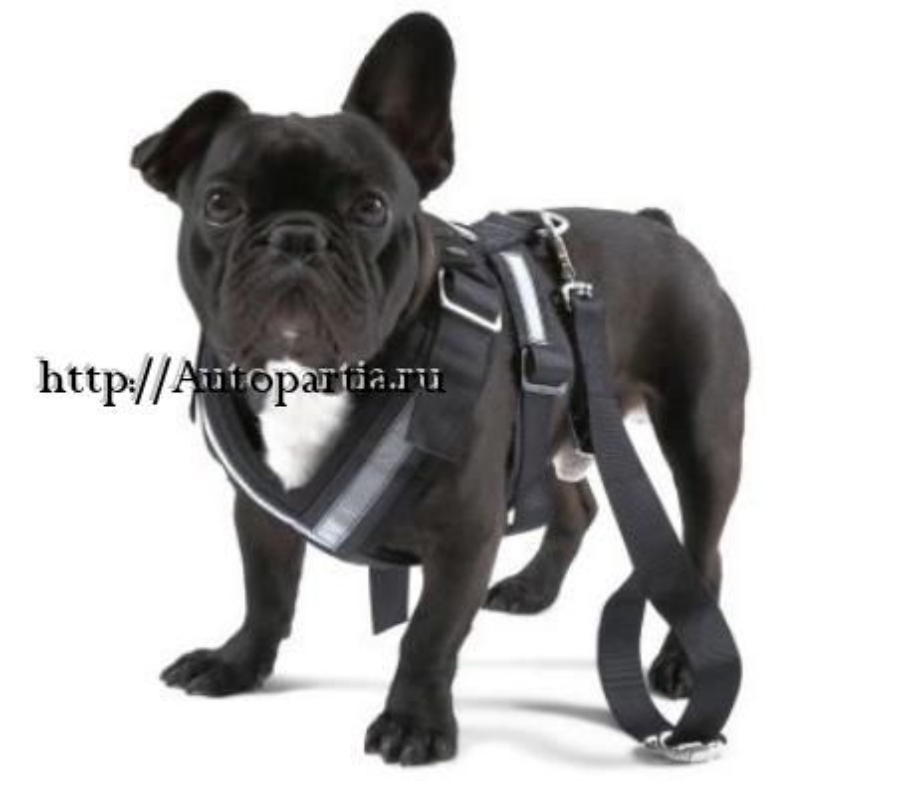 Ремень безопасности для собаки Skoda Dog Safety Belt размер S